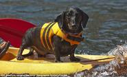 ...you and your dog have life jackets in colors that match your boat.