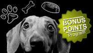Mount Pleasant Vet Offers Bonus Points Program