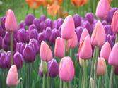 Exactly how To keep up FLower Bulbs