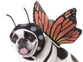 Animal Planet PET20101 Butterfly Dog Costume, Small