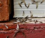 How to Treat Termites