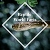 Reptile World Facts